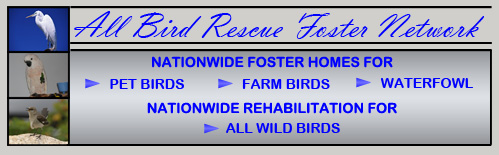 logo for the all bird rescue foster network